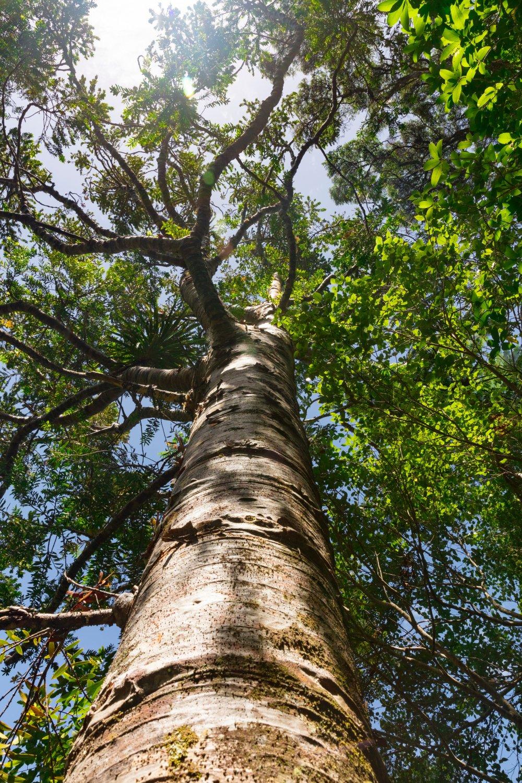 Hjälp med trädfällning i Norrtälje